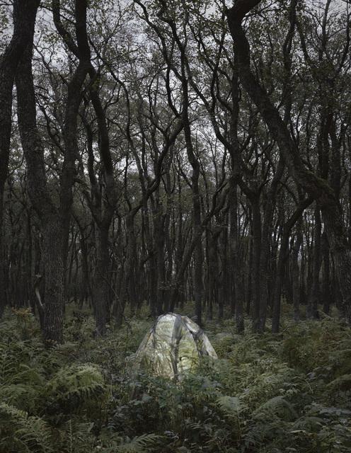 , 'Ferns,' 2019, Galleri Andersson/Sandstrom