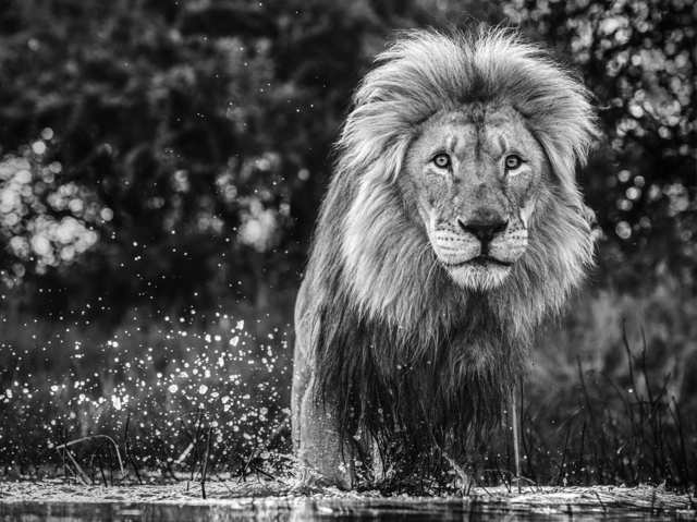 David Yarrow, 'After the Flood', 2020, Photography, Archival Pigment Print, Maddox Gallery
