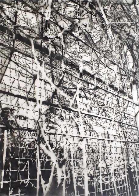 , 'Plant vs. Fence Part I,' 2009, Galerie Nikolaus Ruzicska