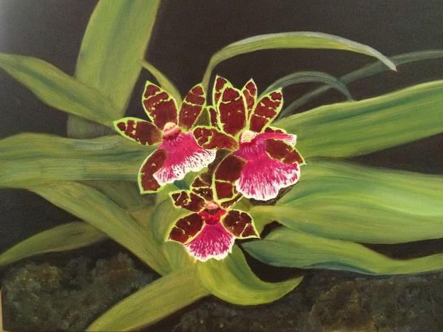 , 'Orchid Plum Daddy,' ca. 2013, Adah Rose Gallery