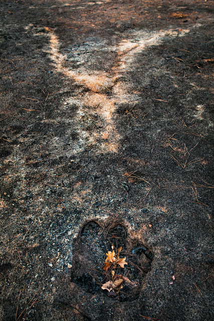 , 'Stump hole and ash from a burned tree, East Bastrop, Texas,' 2011, Susan Eley Fine Art