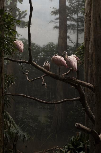 , 'Roseate Spoonbill,' , Kopeikin Gallery