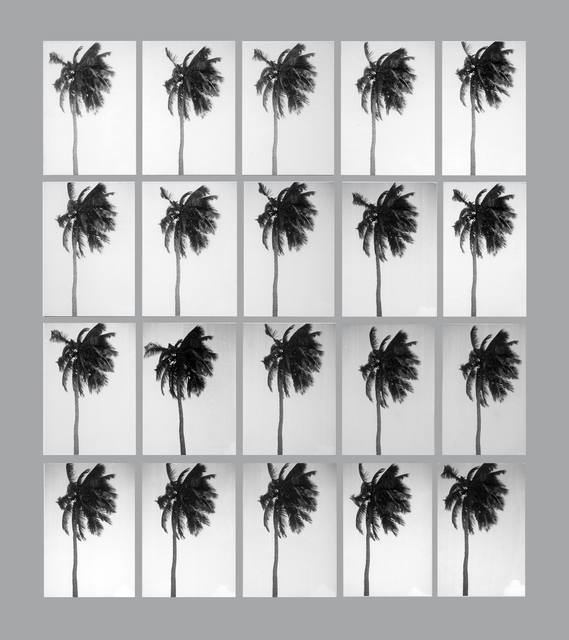 , '20 Seconds (in the life of a palm tree),' 1975-2012, Herlitzka + Faria