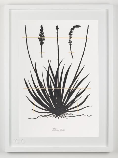 , 'Expedición extinción (Tofieldia falceata),' 2018, Fernando Pradilla/El Museo