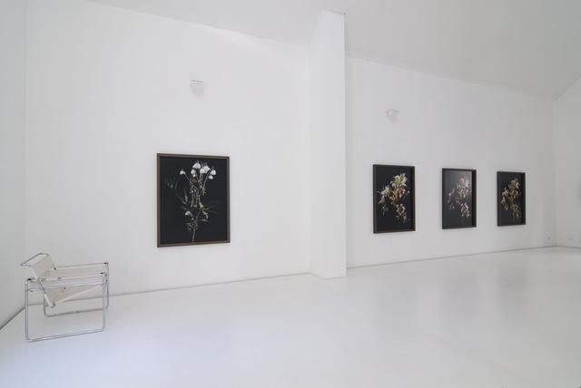 , 'Chrysanthemums,' 2008, Brigitte March International Contemporary Art