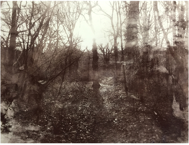 , 'Queens Wood 1.10,' 2016, Jealous Gallery