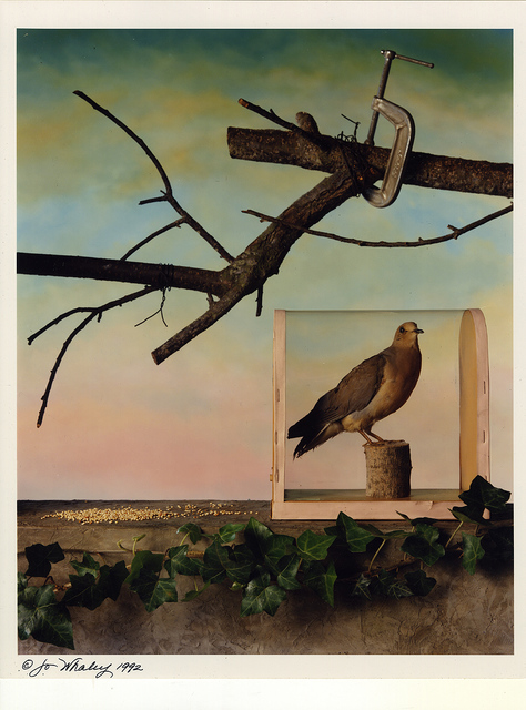 """, '""""Mourning Dove, Winter, 1992"""",' 1992, Be-hold"""