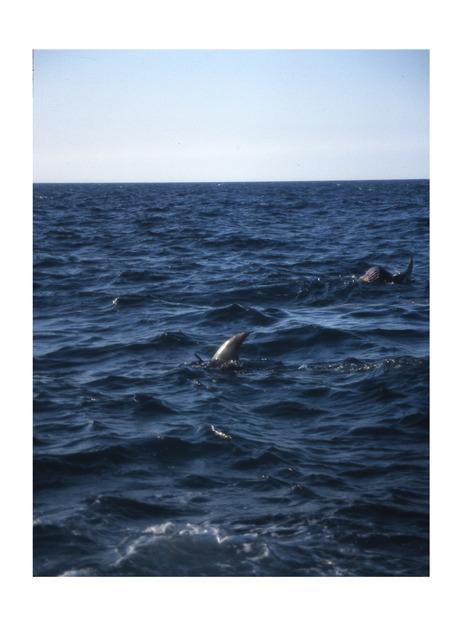 Miguel Calderón, 'La Imposibilidad de Escapar (Jaws 5) V', 2002, Instituto de Visión
