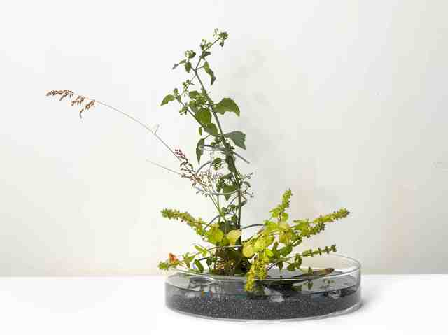 , 'A work for a building plot: Make a flower arrangement for me   ,' 2011, TKG+