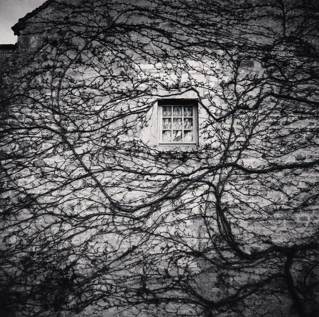 Michael Kenna, 'WINDOW AND VINES, ABBAYE DE FONTENAY, BOURGOGNE, FRANCE, 2013', 2013, Huxley-Parlour