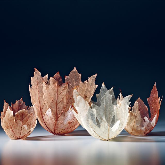 , 'Leaf Bowls,' 2012, Bellevue Arts Museum