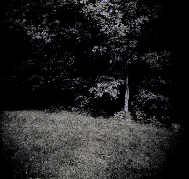 , 'Pasture with Tree,' 1997, John Davis Gallery