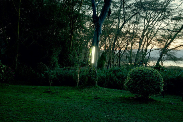 , 'Garden tree light,' 2017, CAMARA OSCURA GALERIA DE ARTE