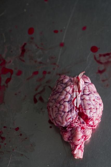 , 'Gehirn (Encephalon), Leibniz IZW, Berlin 2016,' , Galerie Greta Meert