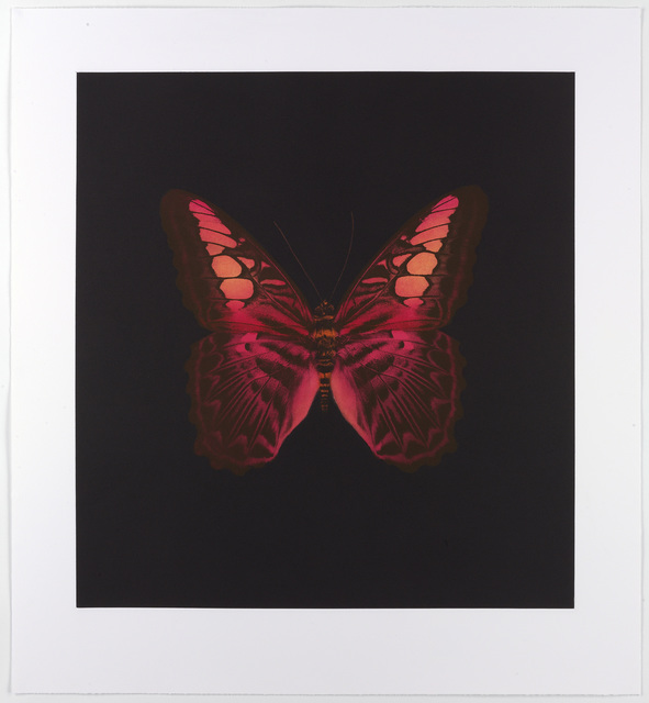 Damien Hirst, 'Memento (01 - Large Red Butterfly)', 2007, Reuben Colley Fine Art