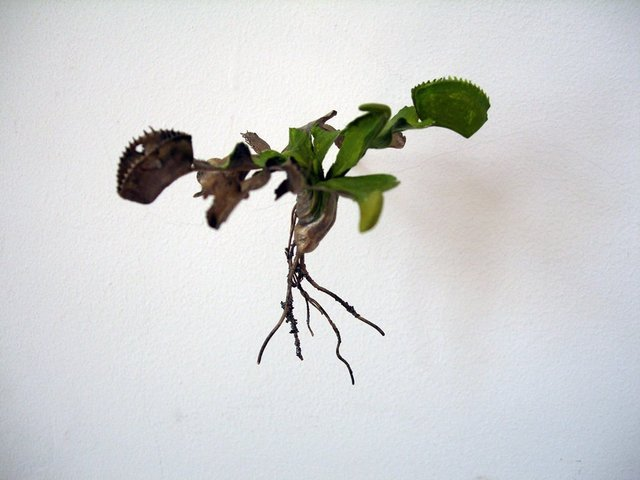 , 'Uprooted (Dionaea muscipula),' 2007, WORKPLACE