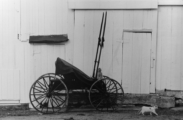 George Tice, 'Buggy and Cats', 1967, Photography, Silver Gelatin, Gallery 270