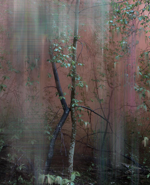 , 'Forest 5,' , Purdy Hicks Gallery
