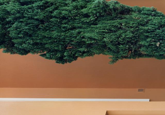 , 'Grand Sud - Cyprès 01,' 2013, La Forest Divonne