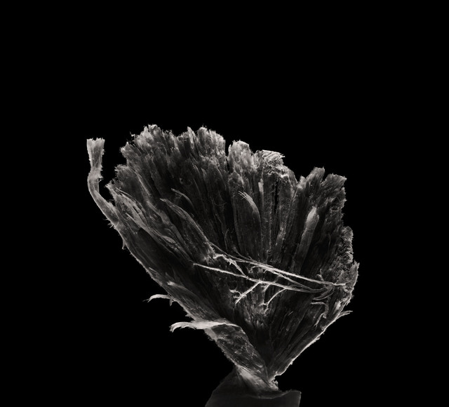 , 'Pectoralis major muscle,' 2018, Novalis Contemporary Art
