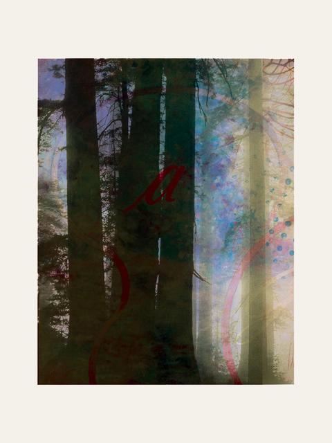 , 'Forest XXIV,' 2018, Artgráfico