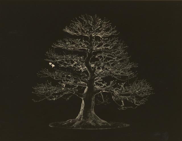 , 'Bonsai #4014,' , Jackson Fine Art