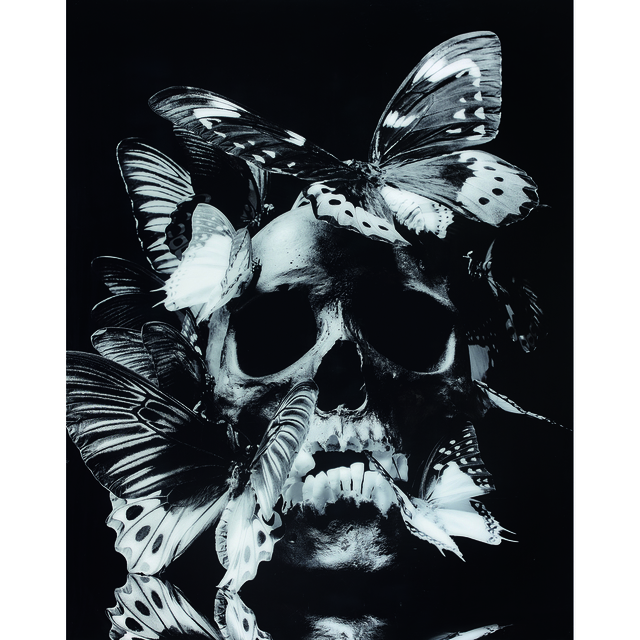 Philippe Pasqua, 'Vanité aux papillons', 2008, Photography, Chromogenic print mounted on Diasec, PIASA