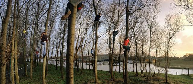 , 'Katwijk - bomen,' 2005, Galerie Les filles du calvaire