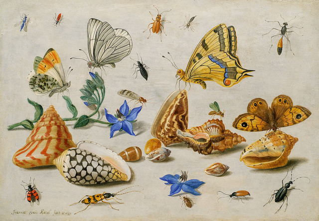 , 'Study of insects, flowers and shells,' 1659, De Jonckheere