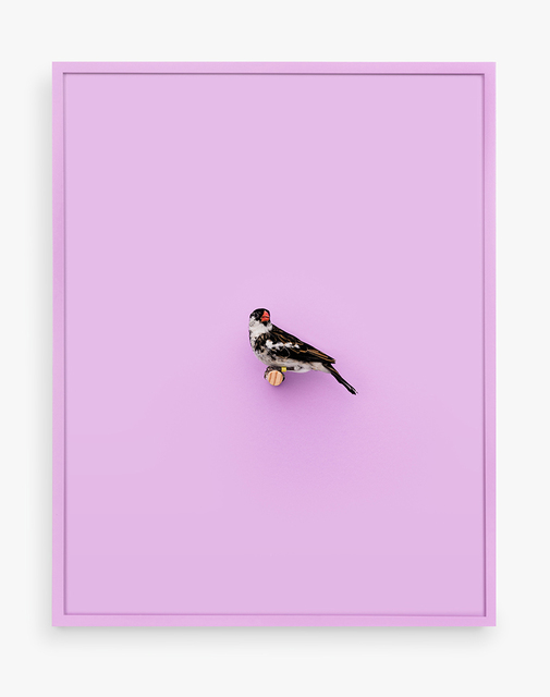 , 'Whydah Finch (Ray of Peace),' 2017, ClampArt