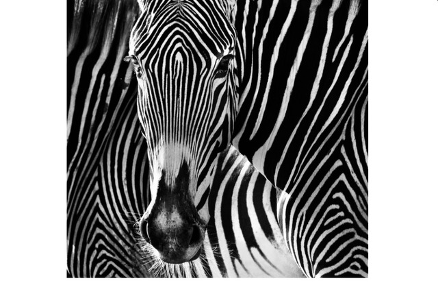 David Yarrow, 'The Puzzle', Photography, Archival ink on paper, Fineart Oslo