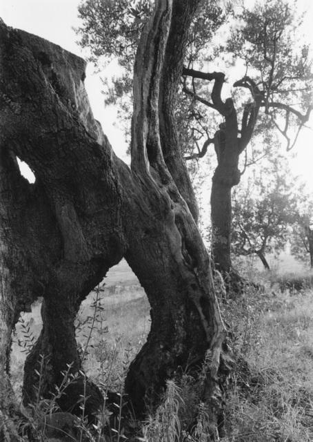 , 'Tuscan Trees #39,' 1998, Wirtz Art