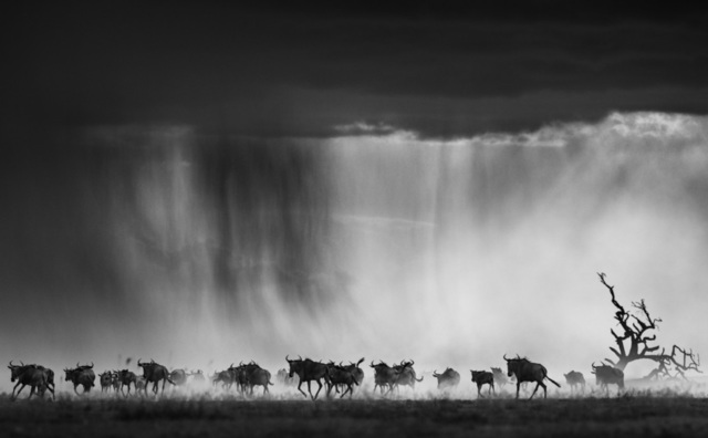 David Yarrow, 'Exodus', 2015, Photography, Archival Pigment Print, Hilton Asmus