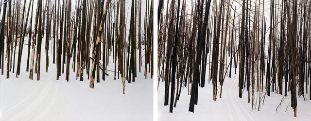 Laura McPhee, 'Untitled (Sawtooth Valley, Idaho) (#94104-94089)', 2008, Benrubi Gallery