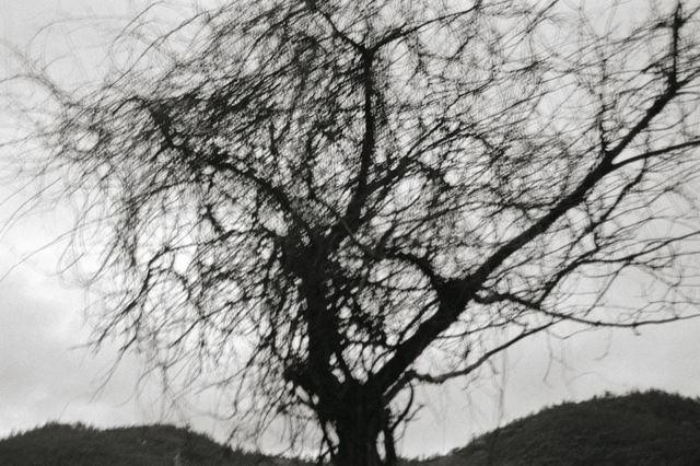 Lee Gap-chul, 'Damyang', 2005, Photography, Three Shadows +3 Gallery
