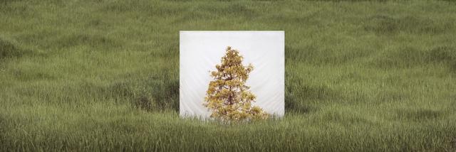 , 'Tree...#10,' 2017, Yossi Milo Gallery