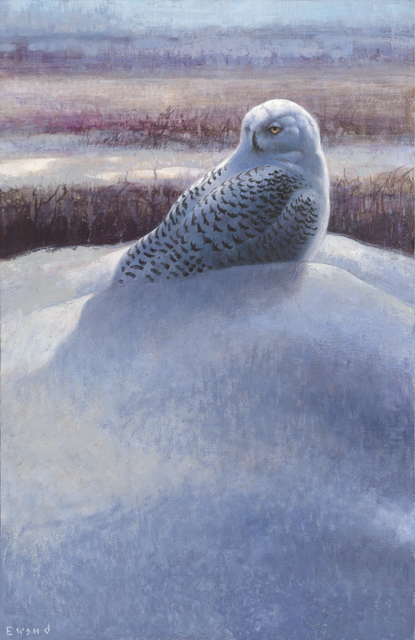 , 'Snowy Owl,' , Stremmel Gallery