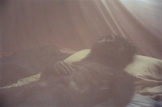 , 'Nabua Monkey, 2008,' 2013, SCAI The Bathhouse