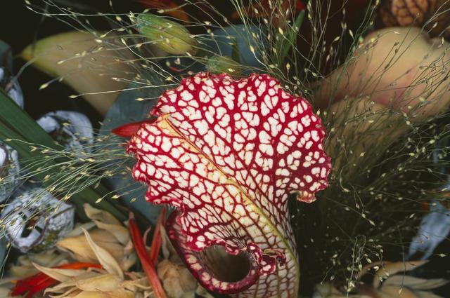 Nobuyoshi Araki, 'Flower Rondeau', 1997, Michael Hoppen Gallery