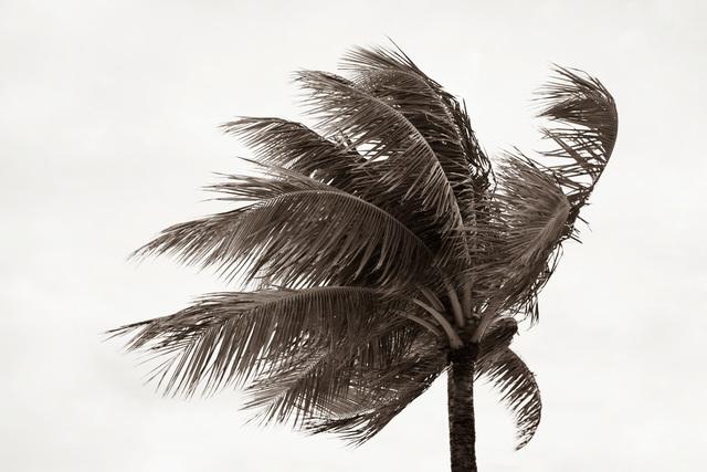Jessica Nugent, 'Tropical Breeze No3', ArtStar