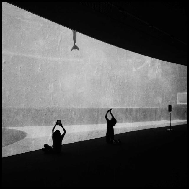 , 'Acquarium, Genova,' , ILEX Gallery