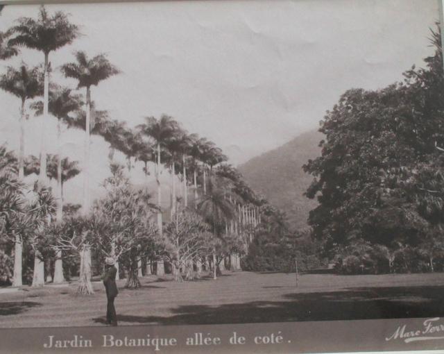 , 'Jardin Botanique allée de côté, Rio de Janeiro,' ca. 1885, Fólio Livraria