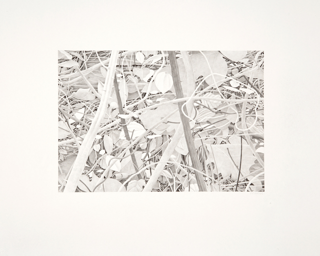 Bill Richards, 'Vines and Branches', 2012, Nancy Hoffman Gallery