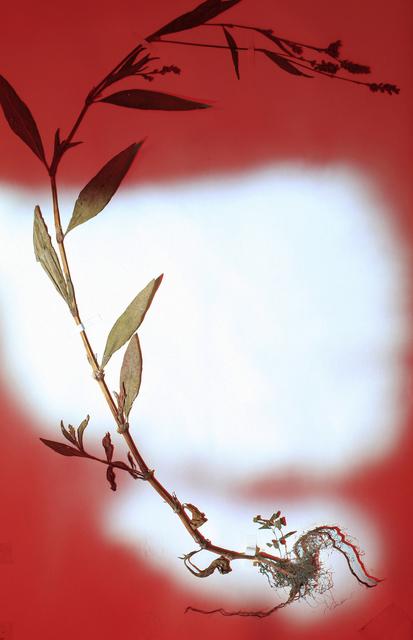 , 'Herbier populaire VI,' 2017, Galerie Laurence Bernard