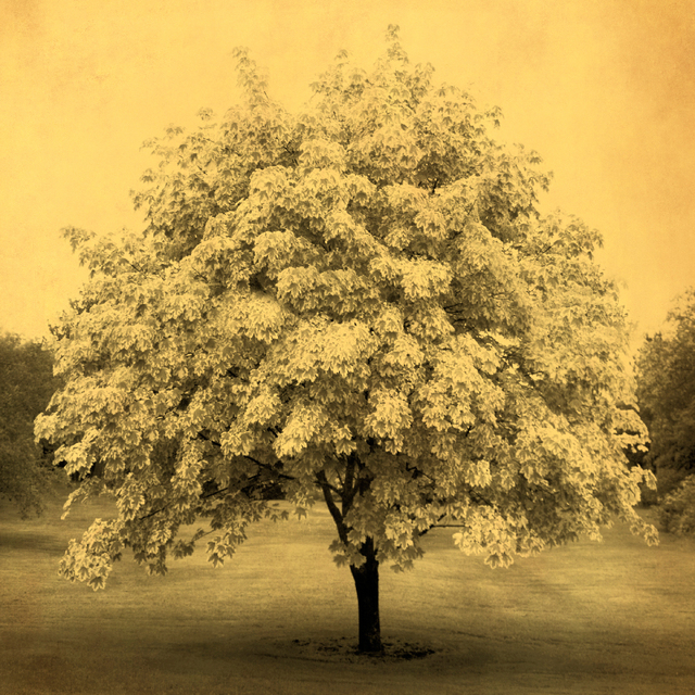 , 'Blooming Tree,' 2011, Holden Luntz Gallery