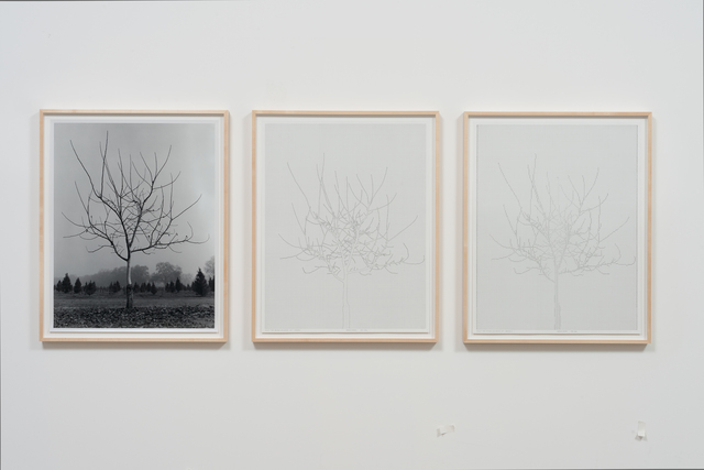 Charles Gaines, 'Walnut Tree Orchard, Set 4 (version 2) ', 1975-2014, Hammer Museum