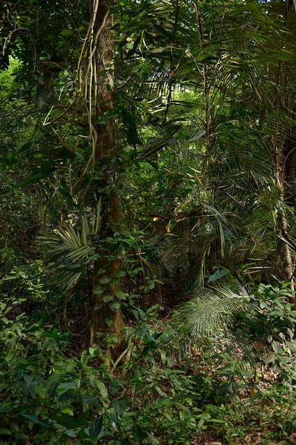 """, 'Da série """"Cristalização da Paisagem"""", Rio de Janeiro, Junho de 2014 [From the series """"Landscape Crystallization"""", Rio de Janeiro, June 2014],' 2015, Casa Triângulo"""