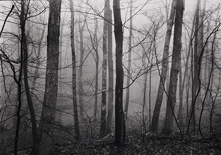, 'Redding Woods #4, Redding, CT,' 1968, Pucker Gallery