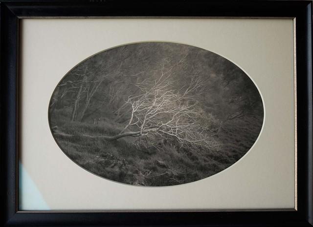 , 'Fallen Bough, Mt. Etna, Sicily, Italy,' , Etherton Gallery