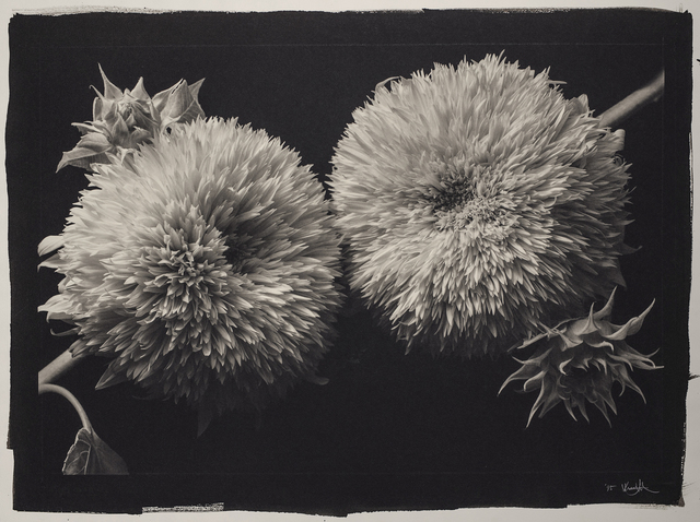 , 'Still Life 317,' 1993, Photography West Gallery